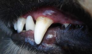 Жители посёлка Фёдоровка пожаловались на стаю агрессивных собак